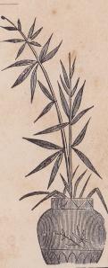 Pugh, J.A. backmark detail4 plant