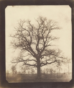 winter tree by Talbot