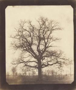 winter tree by Talbot