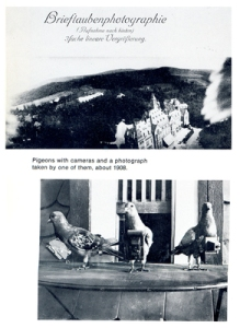 Pigeons Newhall book