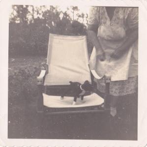 Puppy on chair ca.1950 snapshot